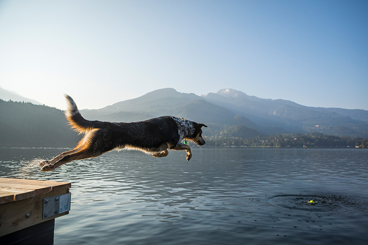Dog jumping into the lake in Whistler