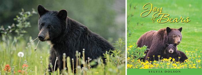 Whistler bears