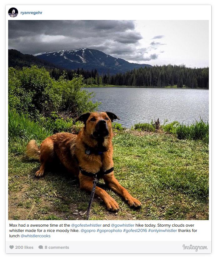 Dog at Lost Lake