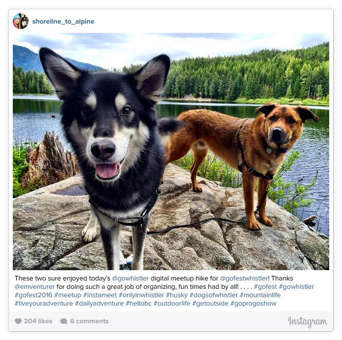 Dogs at Lost Lake