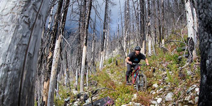 Mountain Biking in Trees