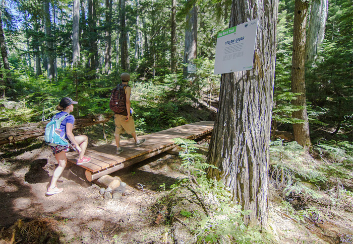 Whistler Forest Walks