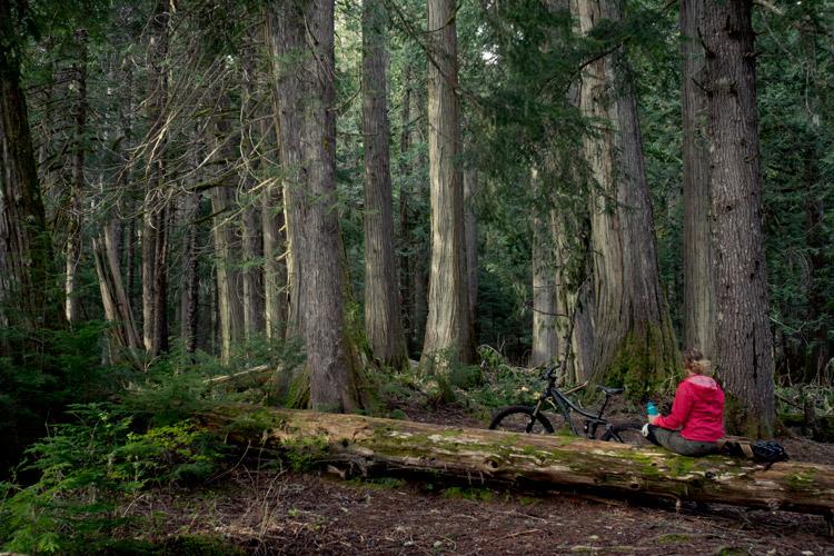 Taking break in Cheakamus forest