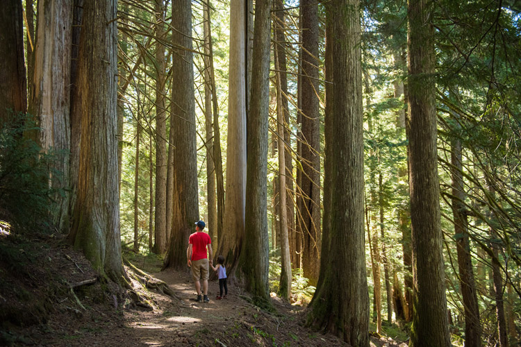 Hiking through ancient cedars to Cheakamus Lake