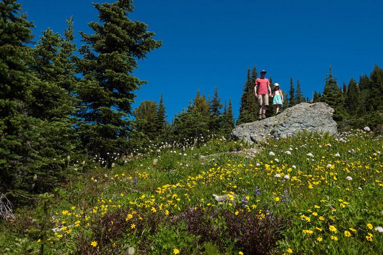 Wildflower season on Blackcomb