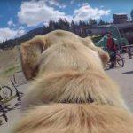Dog's Life in Whistler