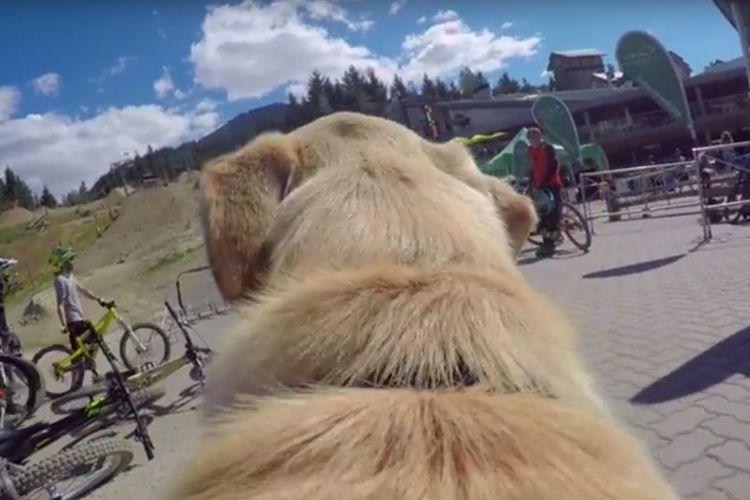 Dog's Life in Whistler