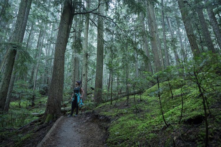 Big Burn hiking trail on Blackcomb mountain