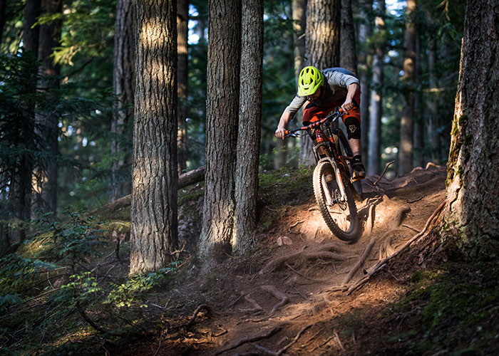 Would you like some roots with your water and energy bar? There's no shortage of them on Blackcomb Mountain.