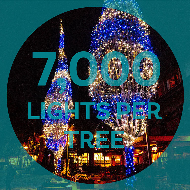 7,000 lights go up into the trees for Whistler's festive season.