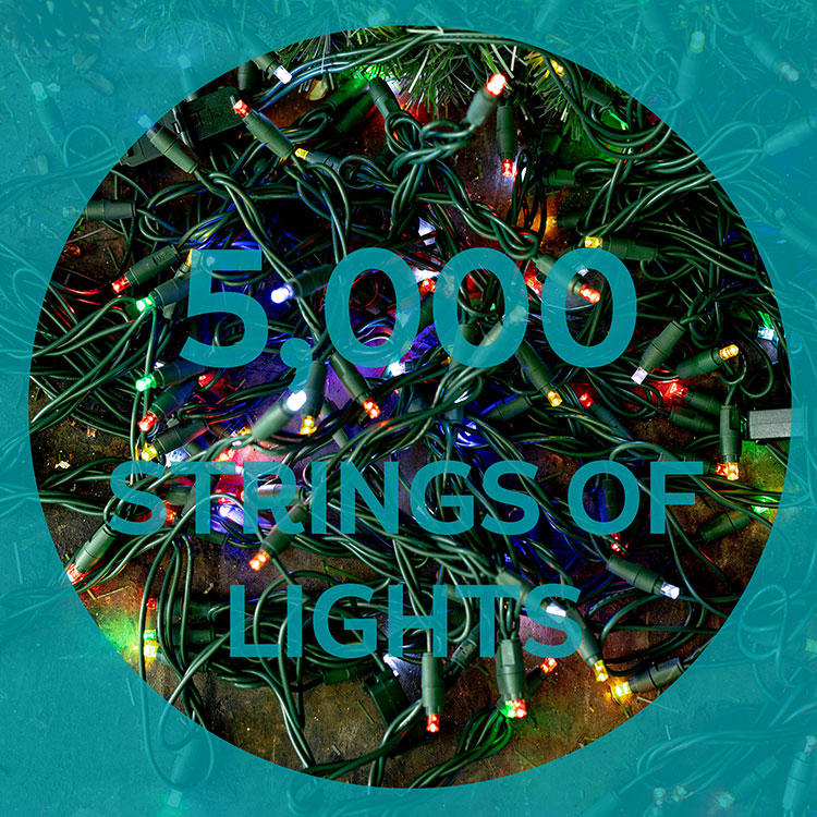 5,000 strings of lights adorn the trees in whistler over the festive period