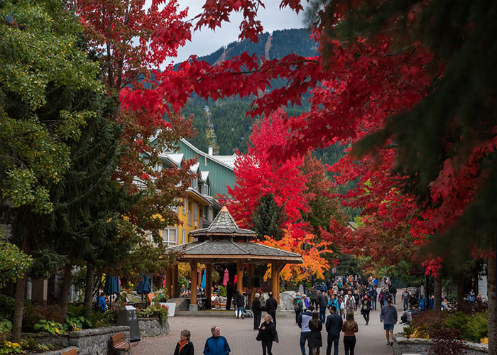 Whistler Village stroll in the fall with the trees turning red and yellow.