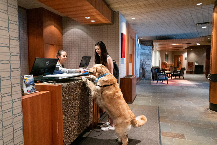 Dog checking in at the Listel Hotel in Whistler