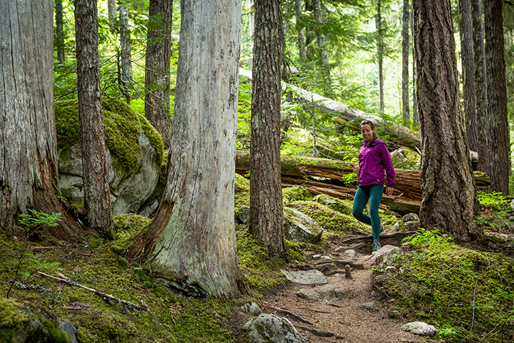 Hiker in the forest in Whistler