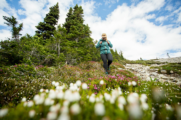 Hiker coming down a trail through wildflowers