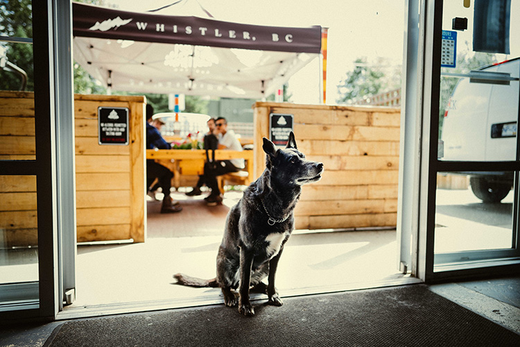 A dog at the entrance to Coast Mountain Brewing