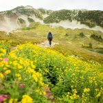 A hiking trail with yellow alpine wildlflowers