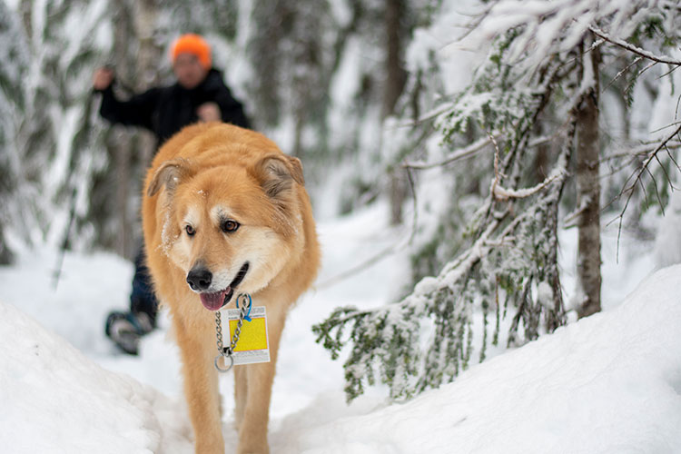 Dogs are allowed on designated trails at Whistler Olympic Park