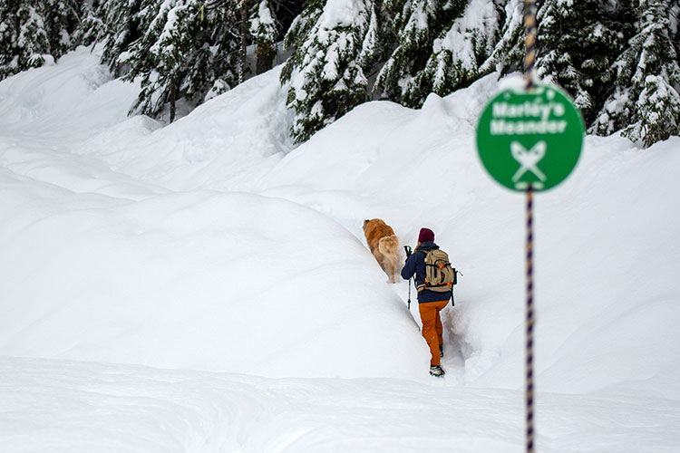 A woman snowshoes at Whistler Olympic Park with her dog.
