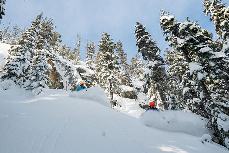 Two skiers enjoy the powder on a tree run on Whistler Blackcomb.