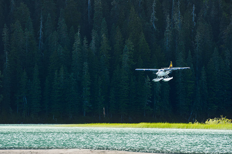 A float plane comes in to land on a lake surrounded by forests.