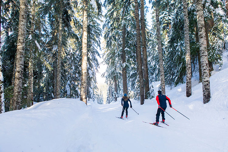 Two cross-country skiers explore the forested trails in Whistler.