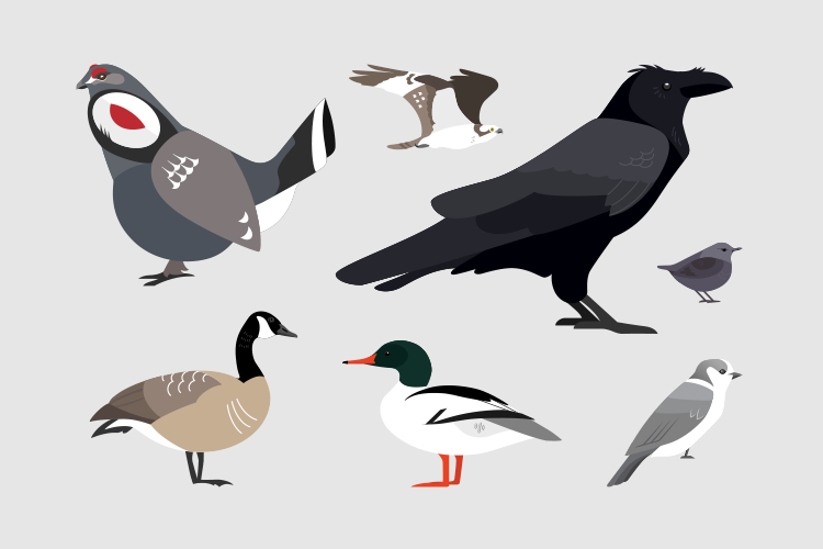 Birds of Whistler.