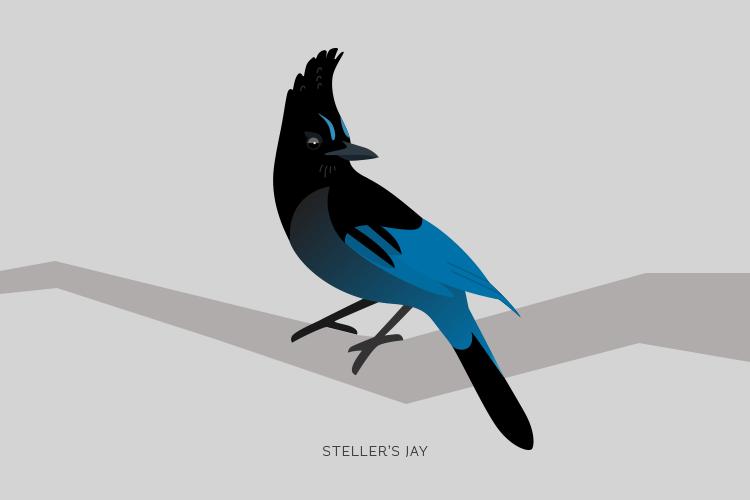 Birds of Whistler.