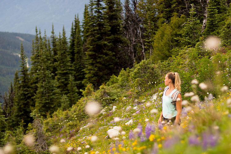 A woman hikes amongst the wildflowers on Whistler Blackcomb.