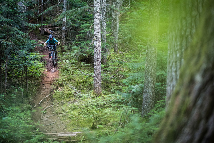 A mountain biker comes down a root laden trail in Whistler's lush forest.