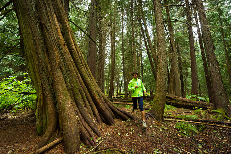 A runner weaves through the trees in Whistler.