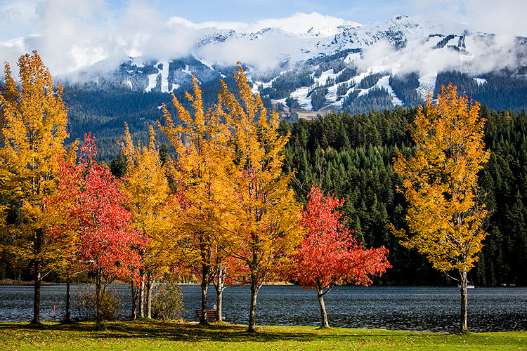 Fall colours seen from Rainbow Park in Whistler.