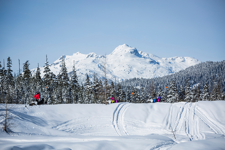 Snowmobile tour in front of the tree line and mountain peak