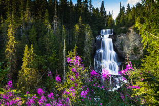Alexander Falls in the summer with alpine flowers blooming around it.