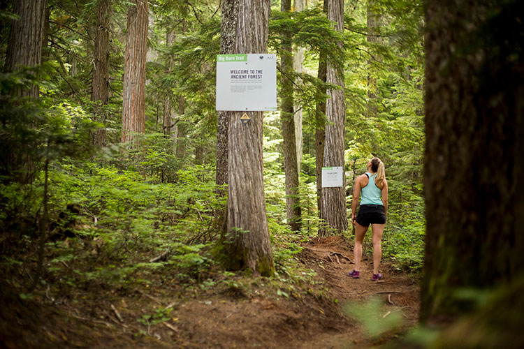 A hiker starts the Ascent Trail on Blackcomb Mountain in Whistler.