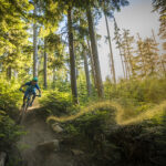 A cross country mountain biker speeds through the Whistler forest.