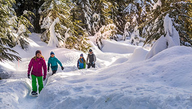 15% Off Snowshoe Tours
