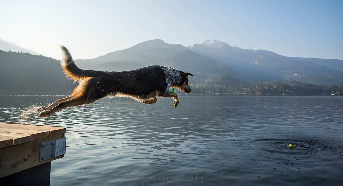 Whistler BC Canada | Travelling with Pets | Tourism Whistler