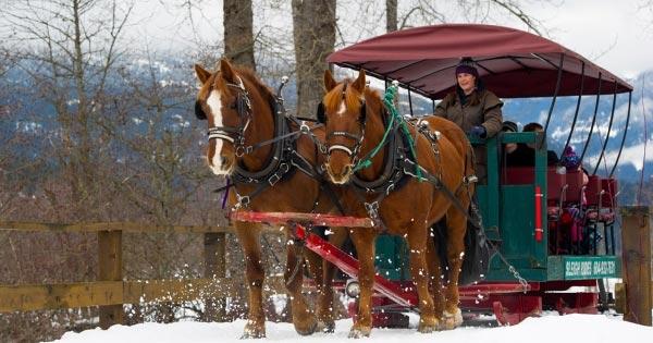 Winter Sleigh Rides Whistler Bc Tourism Whistler