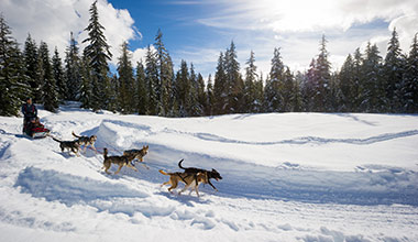 Dogsledding discount