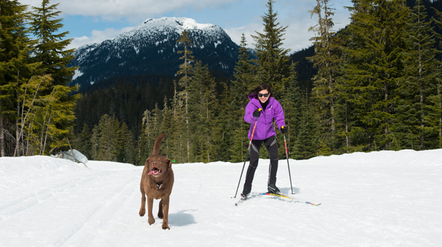 Dog-friendly Nordic Skiing