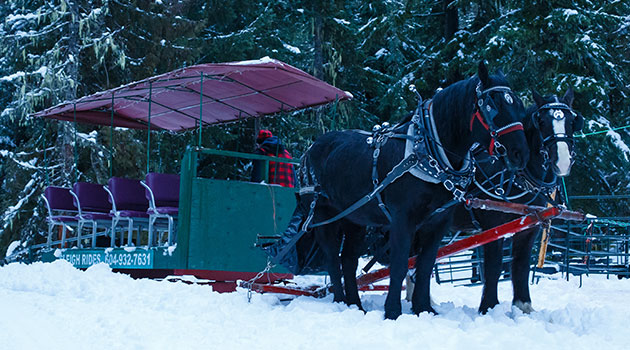 Glide through the snow drawn by gentle, giant Percheron horses