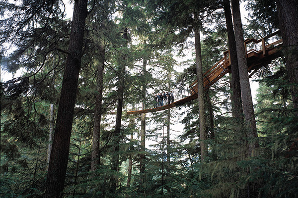 Whistler Tree Top Adventure Course